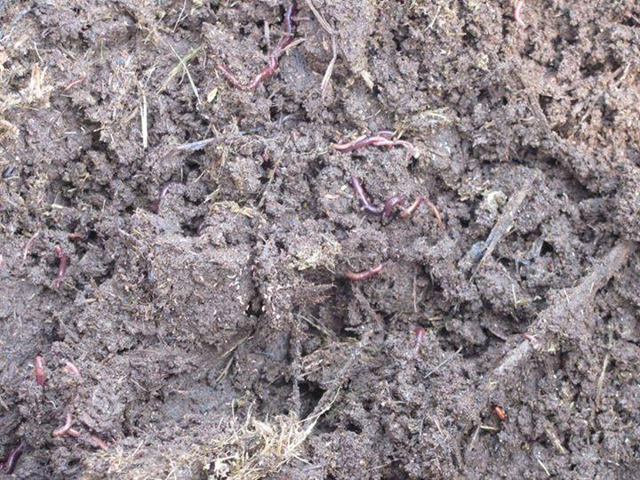 làm đất trồng rau hữu cơ 6