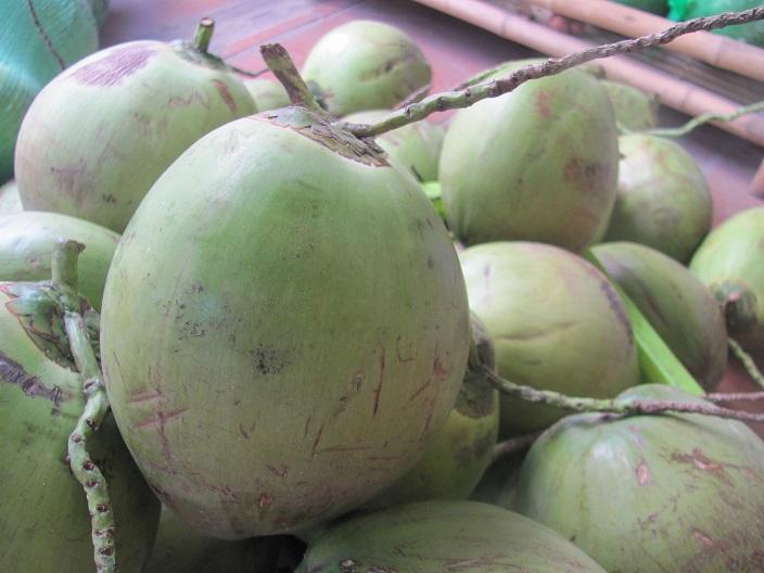 Image result for dừa ninh hòa