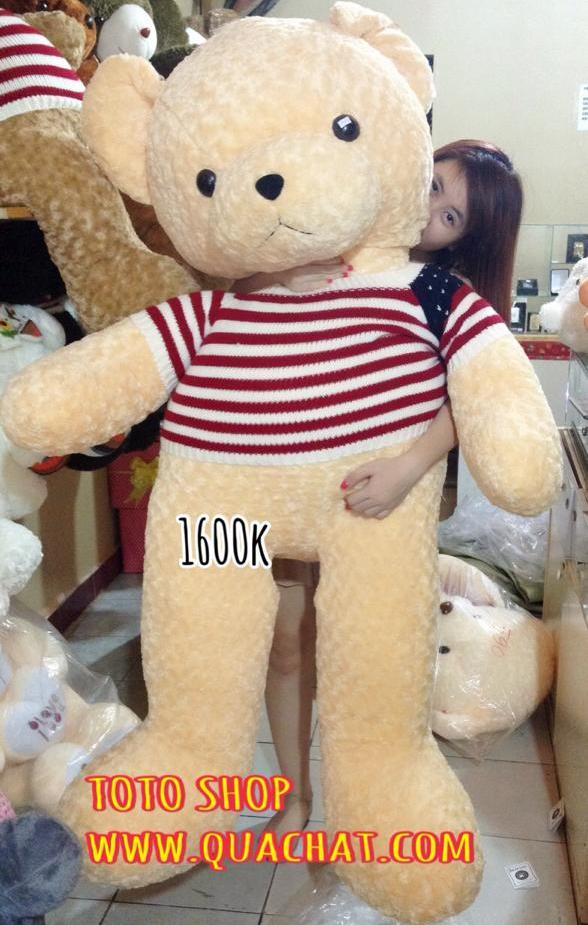 teddy co my