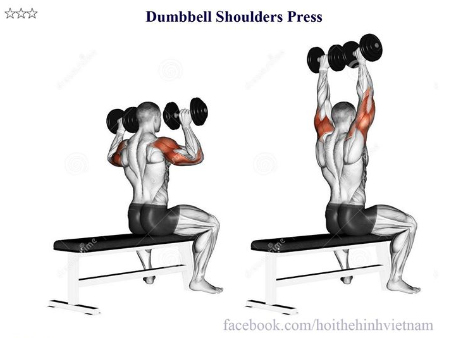 Dumbbell Shoulders Press