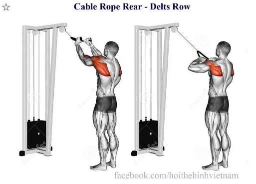 Cable Rope Rear - Delts Row
